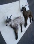 Lifelike Prop Goats