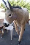 Lifesize Donkey Prop