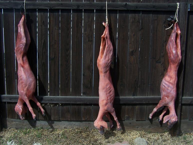 Set of 3 Skinned Goat Props